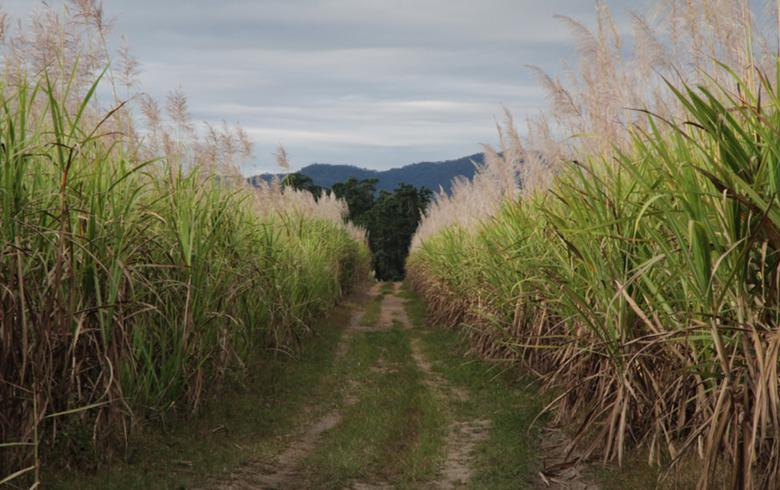 Brazil's Centre-South hydrous ethanol sales fall 20% in April's 1st half